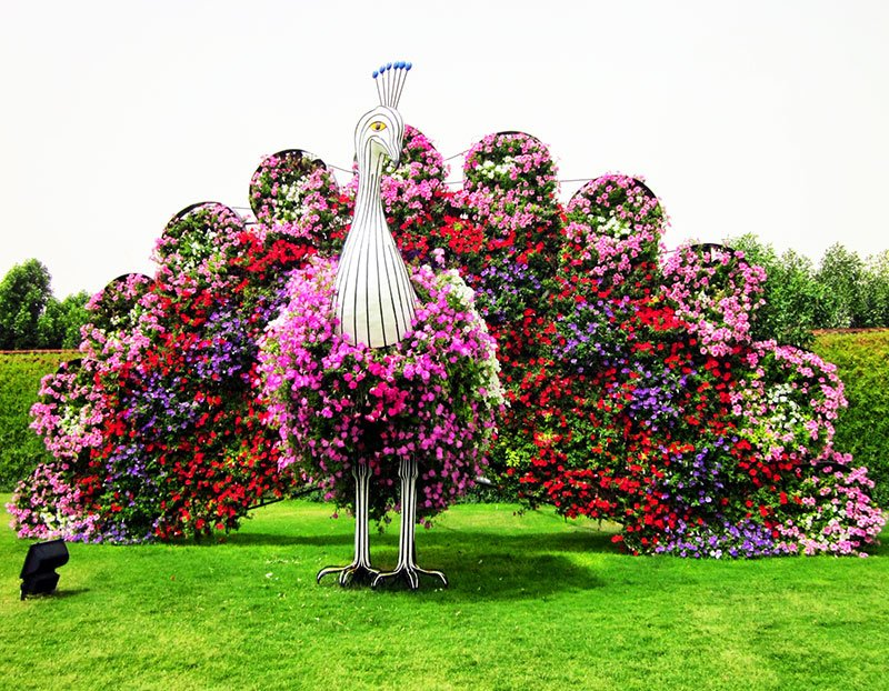 Flower peacock in Dubai Miracle garden, Dubai