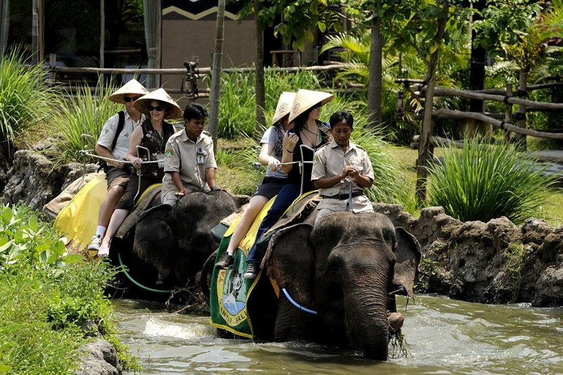 Take an elephant ride, Bali