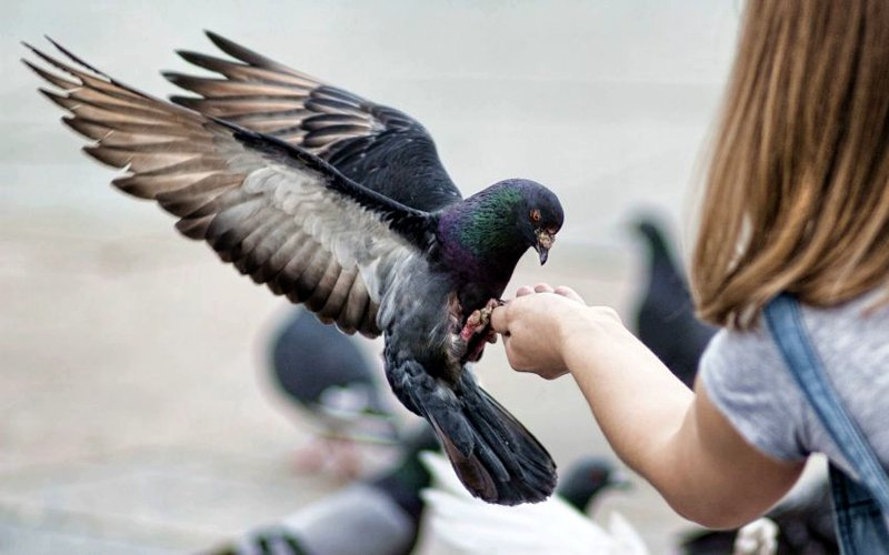 Its forbidden to feed the pigeons? Did not know :-)
