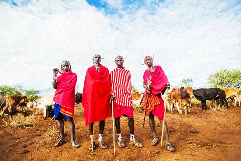 Maasai traditionally wear red tunic and hold a spear at the ready, Arusha