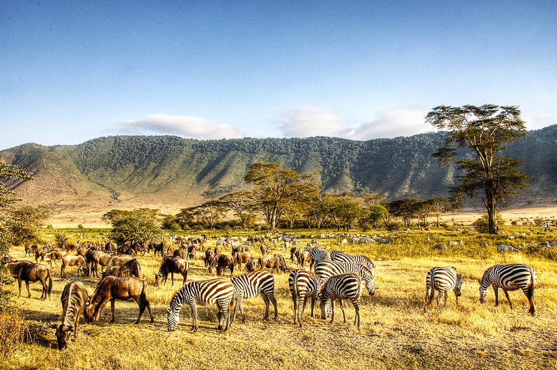 About 30 000 animals inhabit the valley of the crater Ngorongoro, Arusha