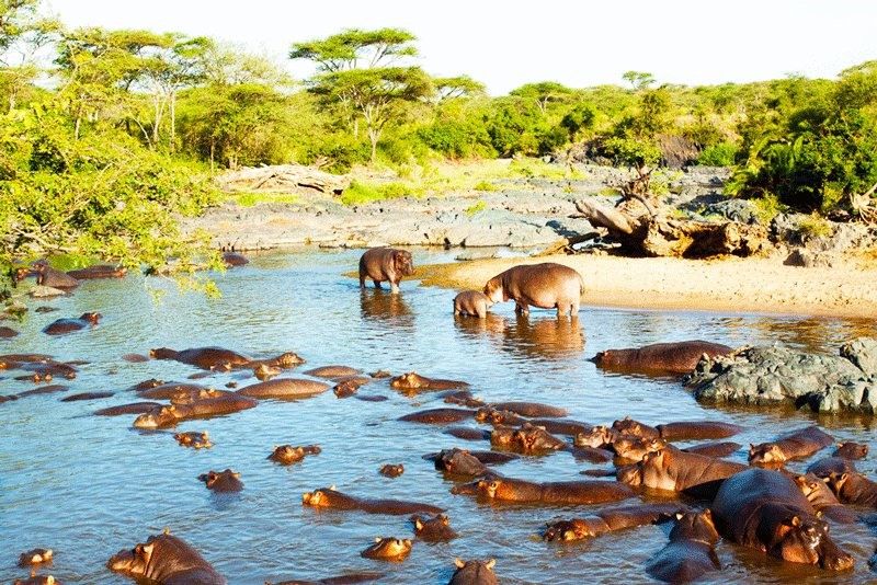 Serengeti Hippo pool on Orangi River, Arusha