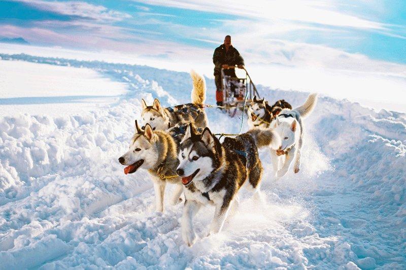 How to take a husky-drawn ride in Rovaniemi 5e9160d27