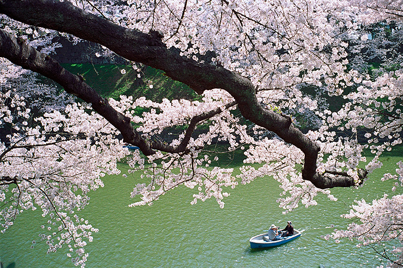 Sakura dortmund