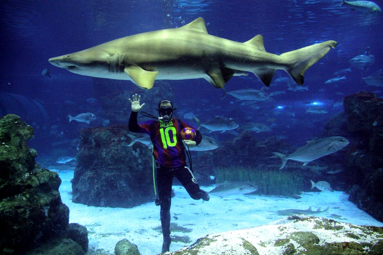 How to dive with sharks in Barcelona