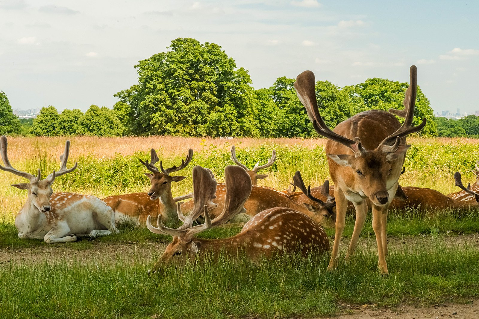 How to feed a fawn in Richmond Park in London