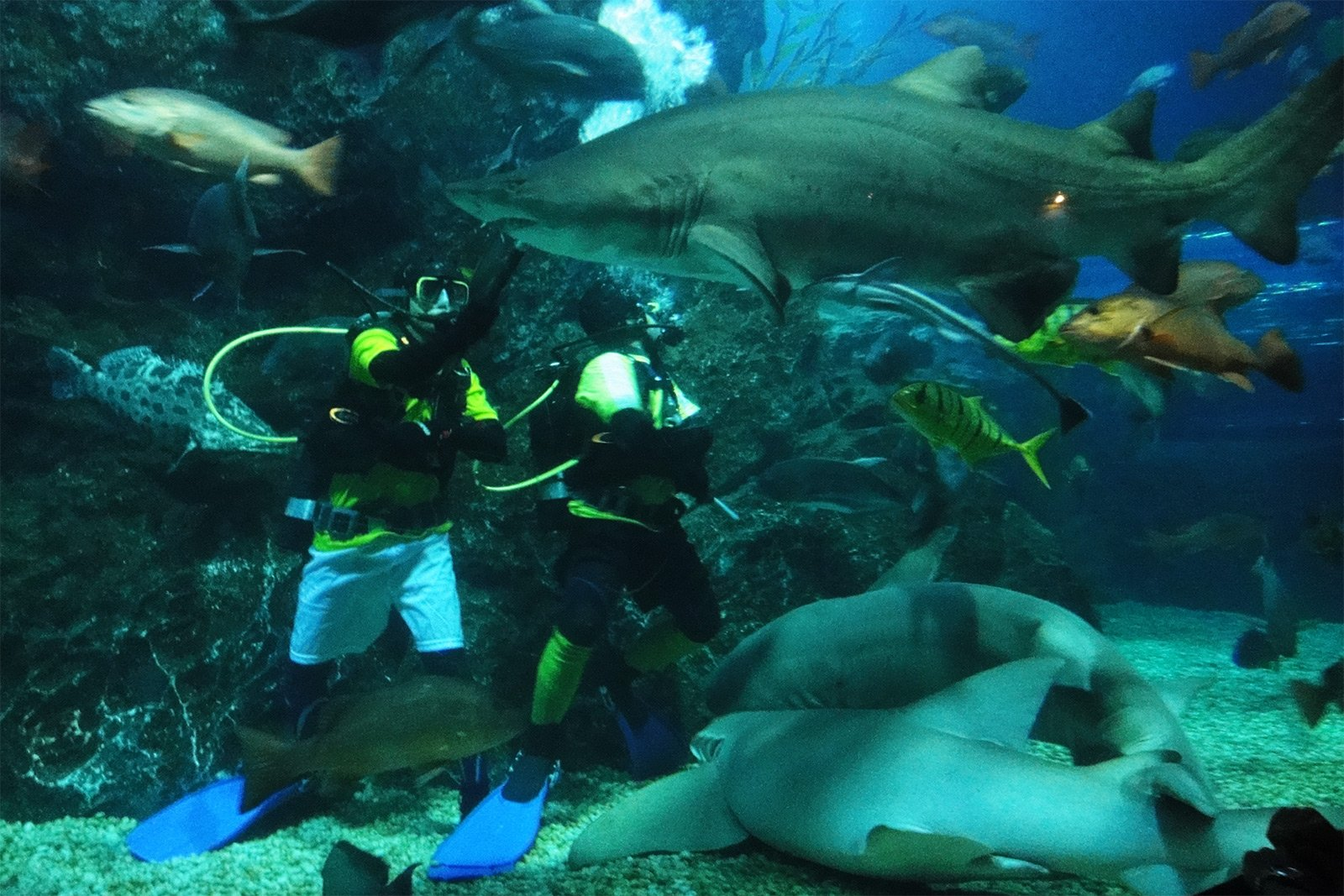 How to diving with grey nurse sharks in Bangkok