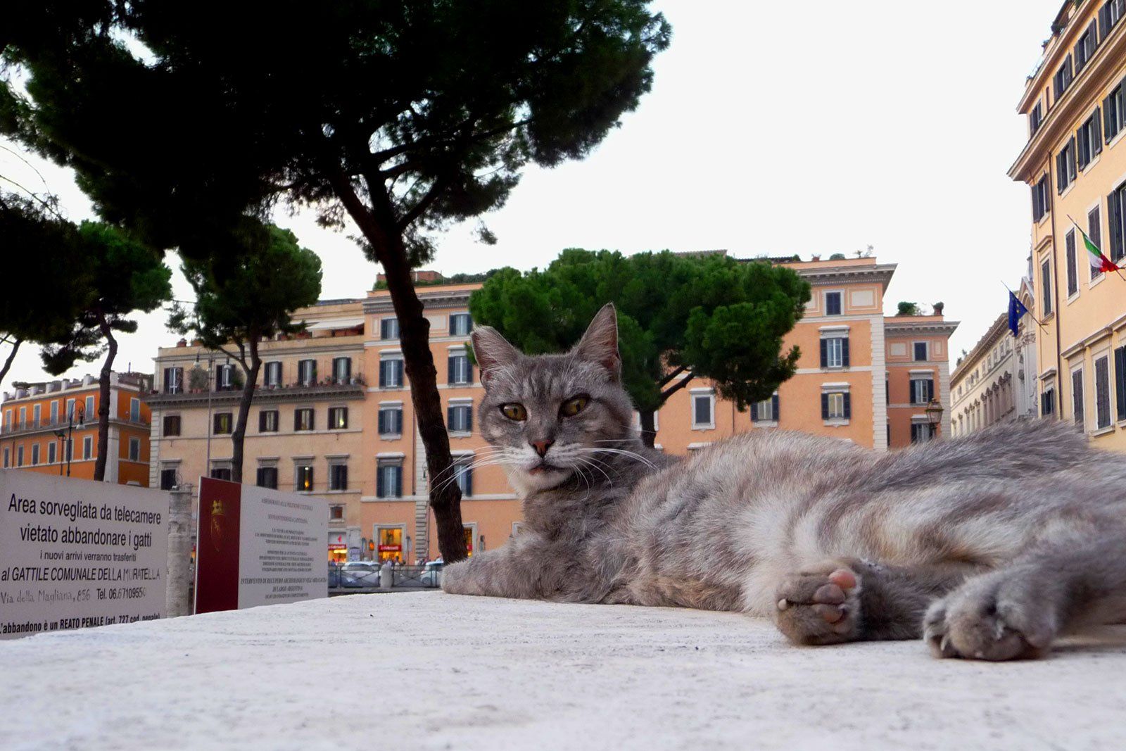 How to become a cat caregiver in Rome