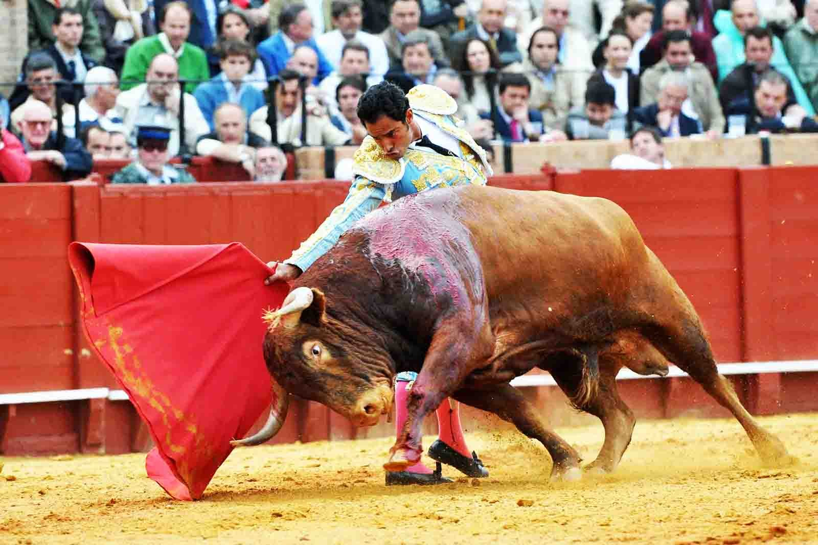 How to see corrida in Seville