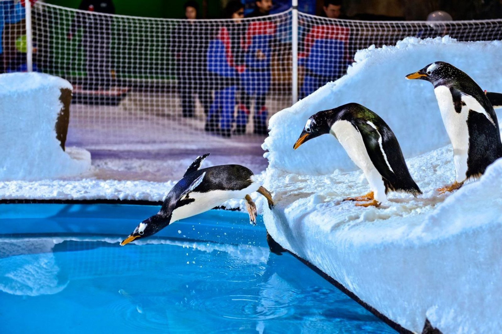 How to swim with penguins in Dubai
