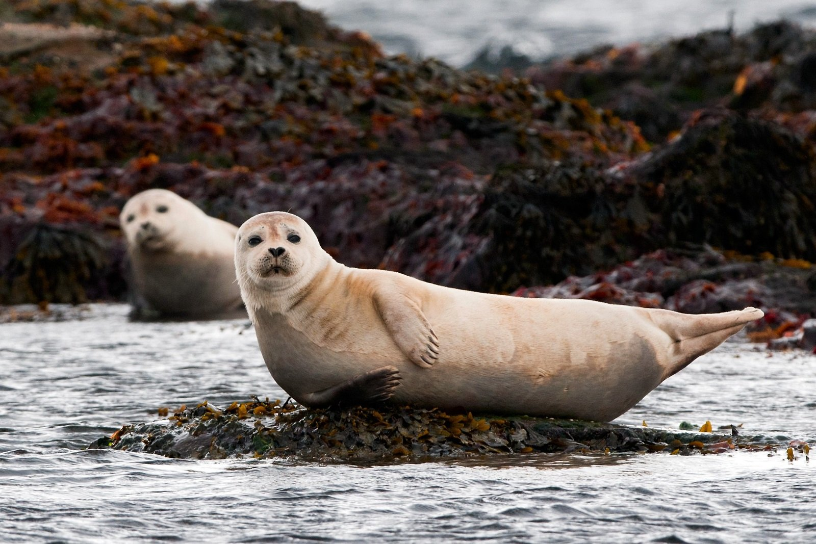 How to watch seals in Reykjavik