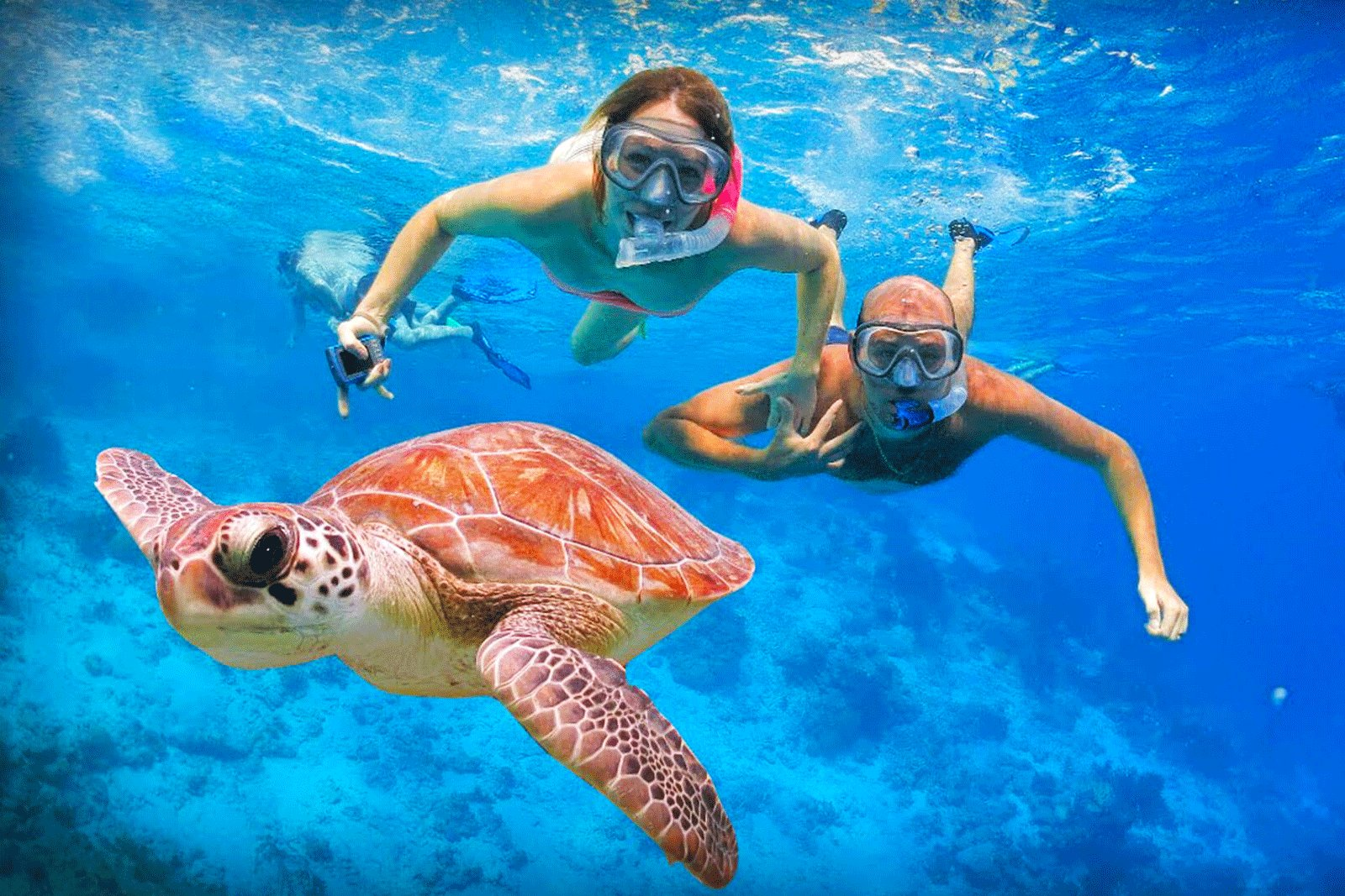 How to swim with turtles in Galle