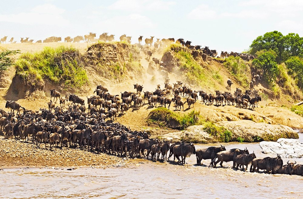 How to see the Great African Migration in Arusha