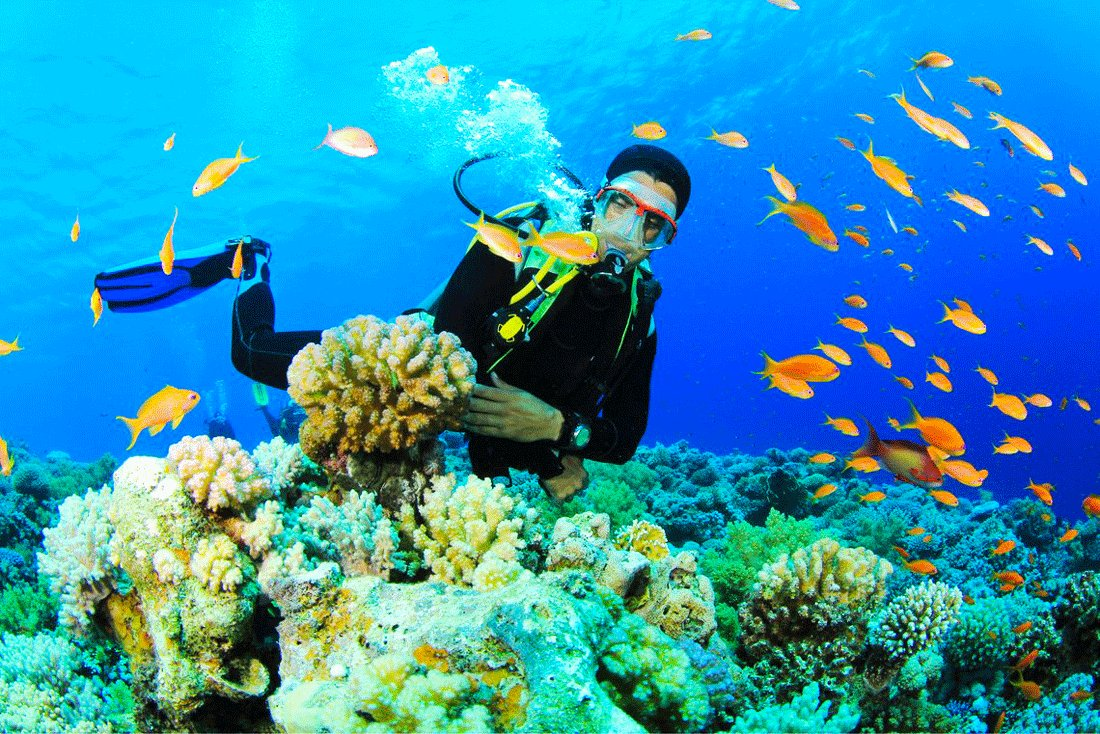How to go Los Roques coral reef diving in Caracas