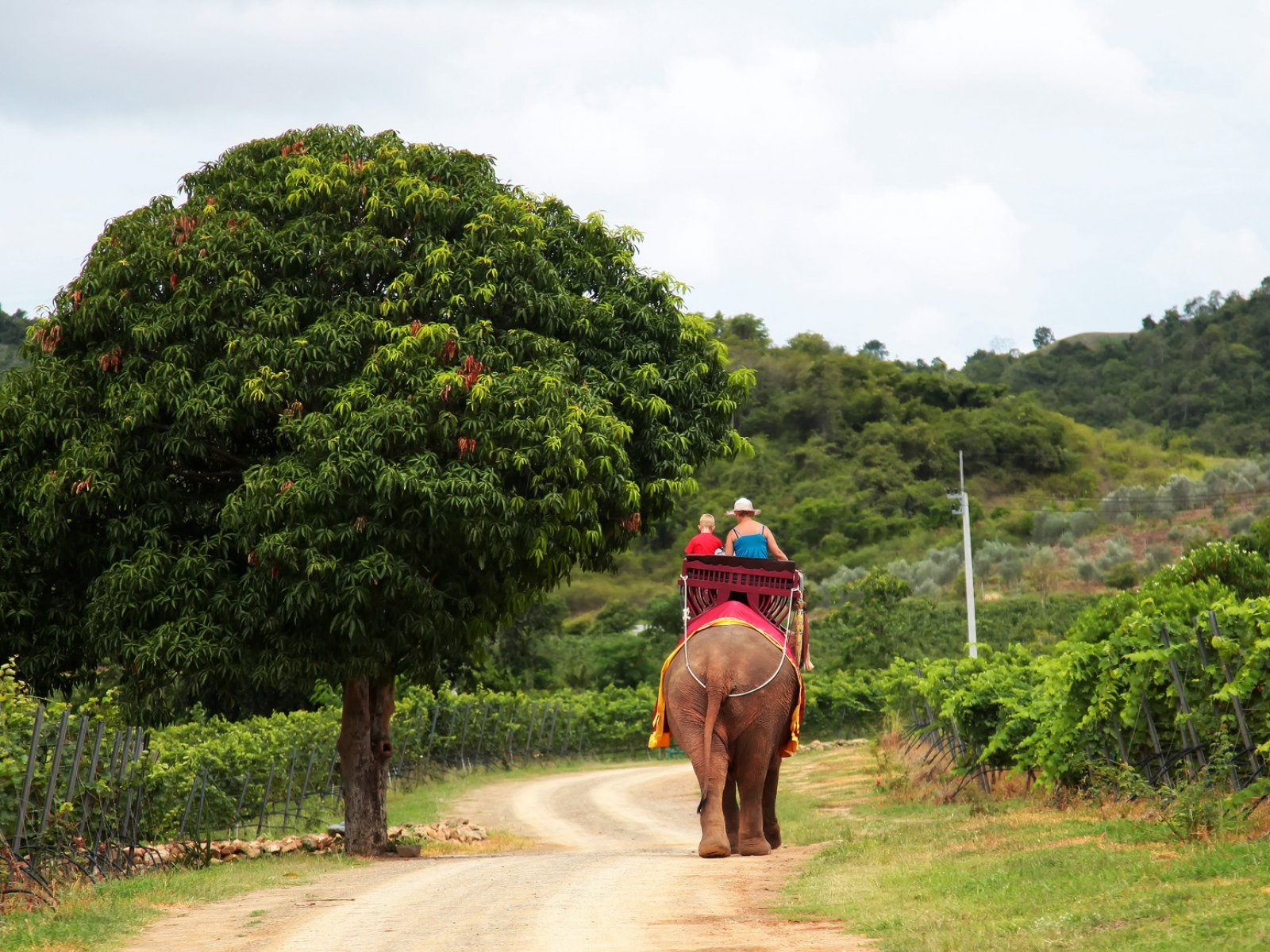 How to ride an elephant in Phuket
