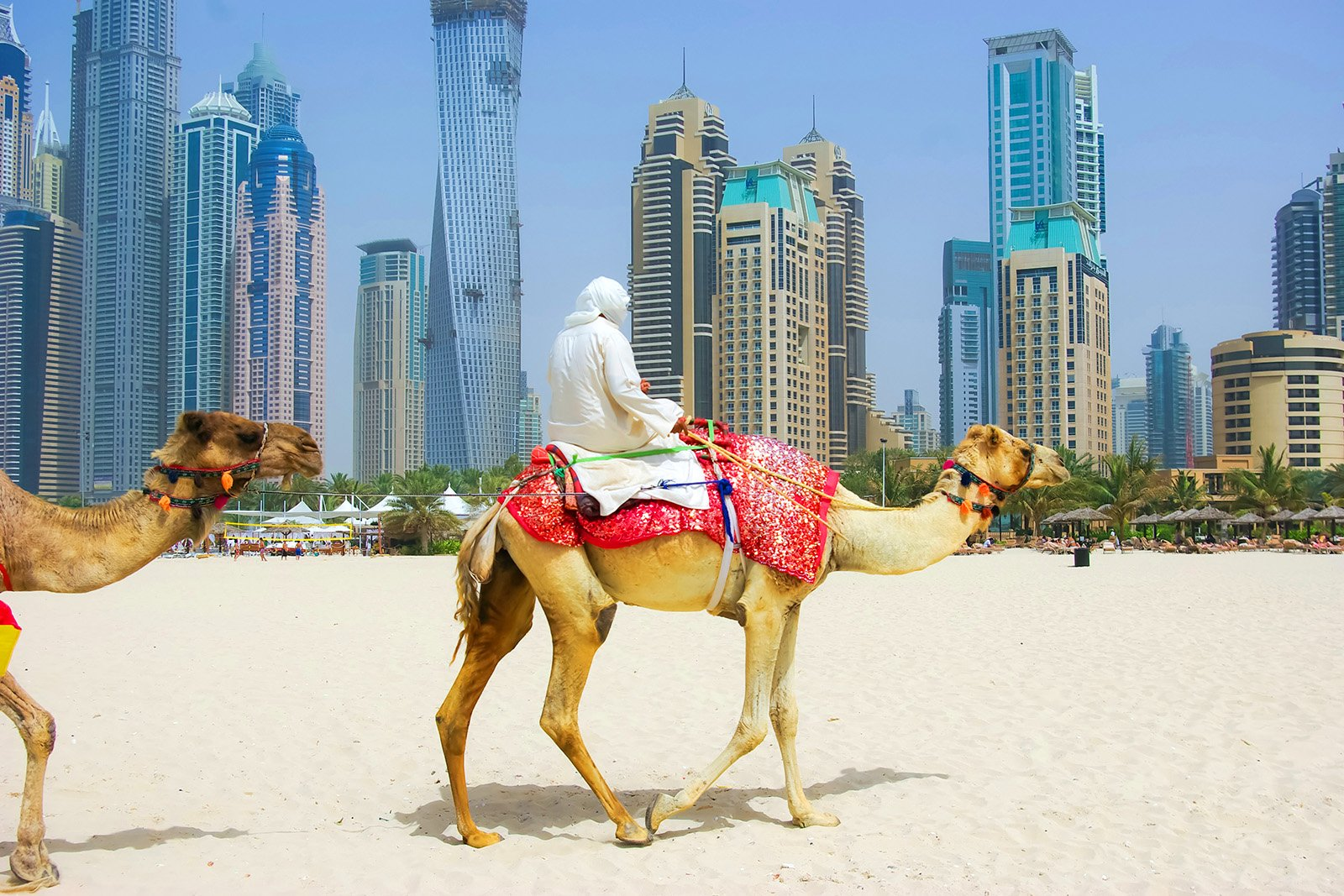 How to ride a camel on marina beach in dubai altavistaventures Choice Image