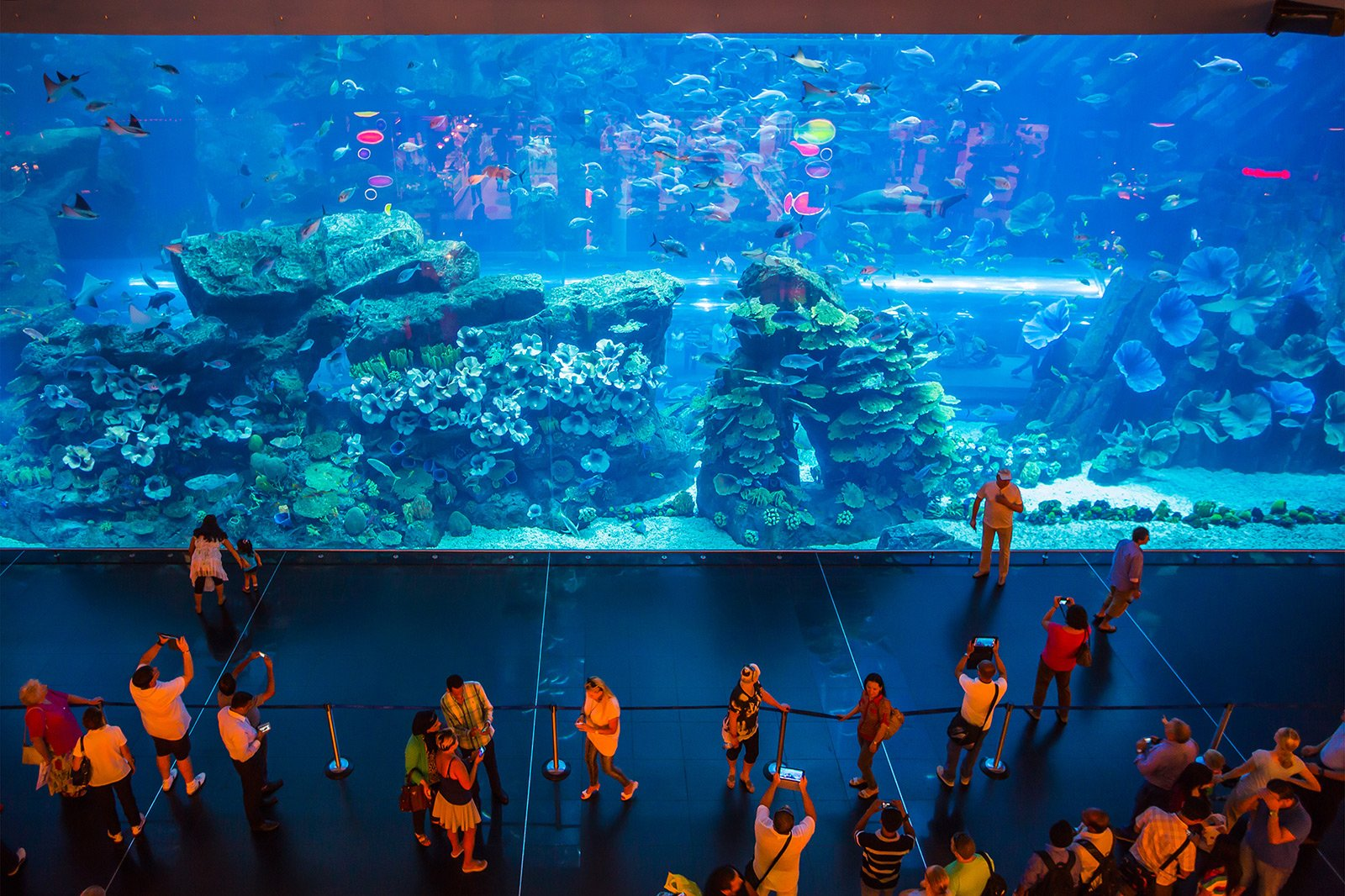 How to see the aquarium with the world's largest glass area in Dubai