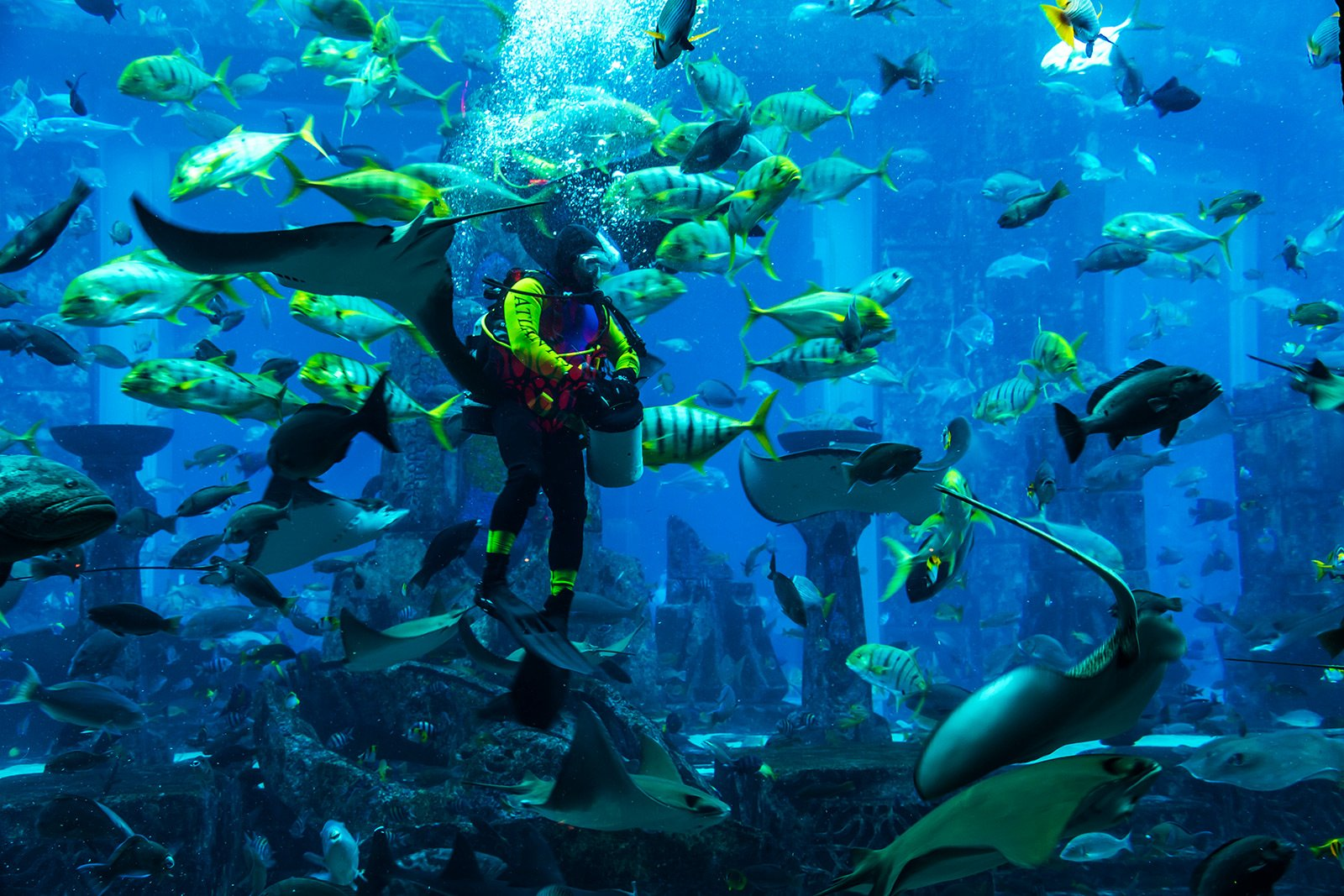 How to dive with sharks in Dubai