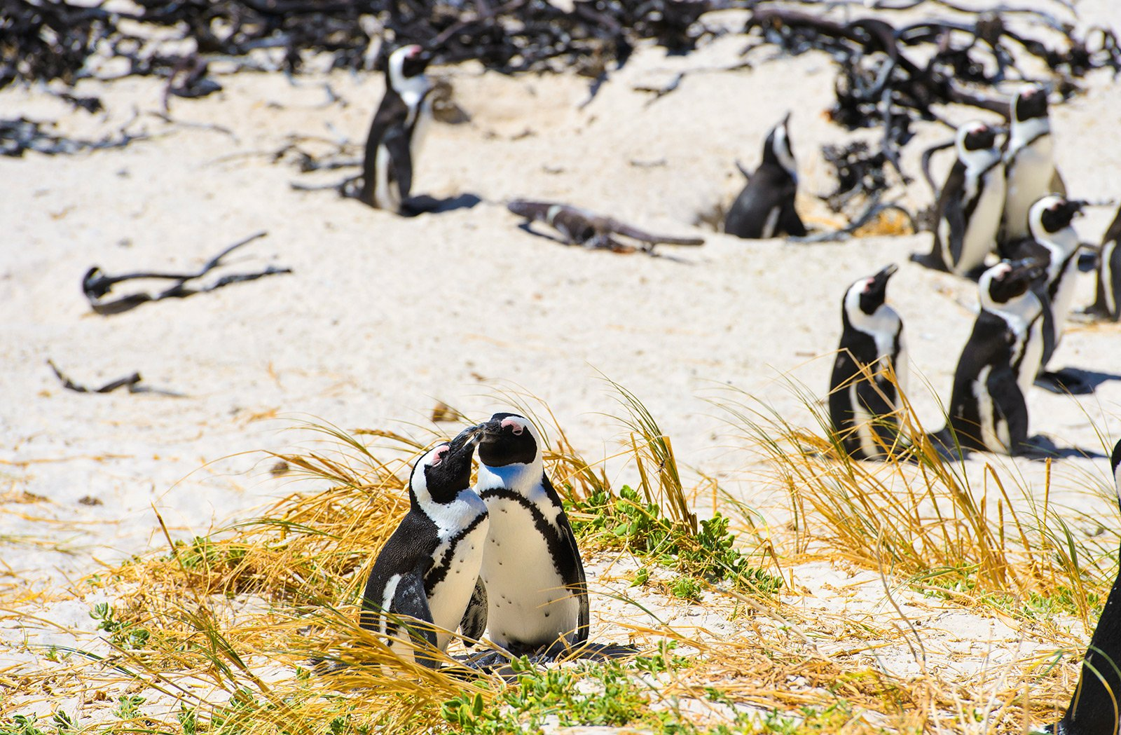 How to meet penguins in Cape Town
