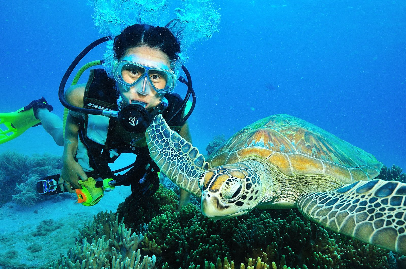 How to diving the Great Barrier Reef in Cairns