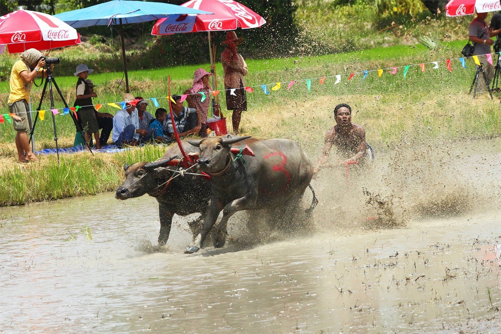 How to visit the Buffalo Race in Pattaya