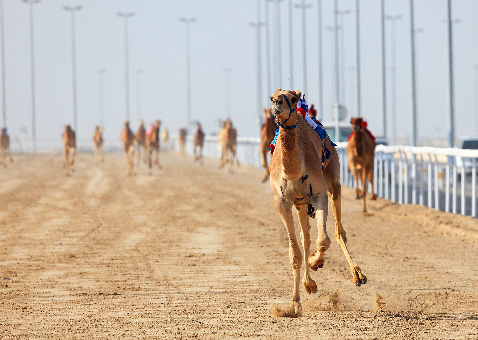 How to see Camel Races in Dubai