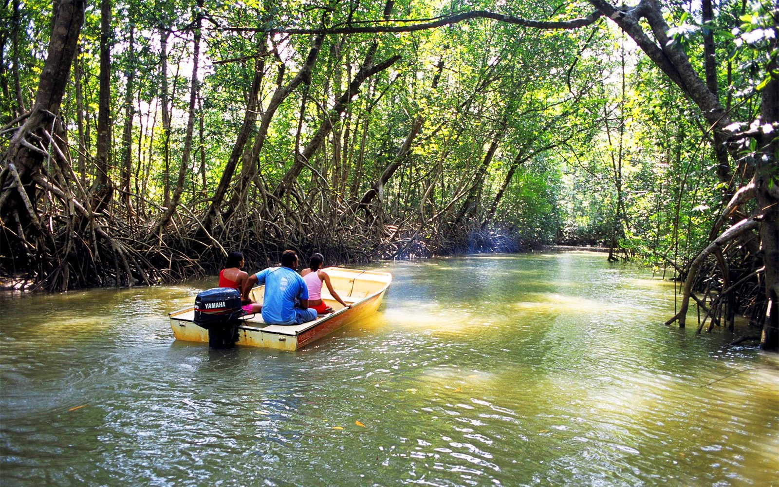 How to take a boat ride alongh the mangroves in Abu Dhabi