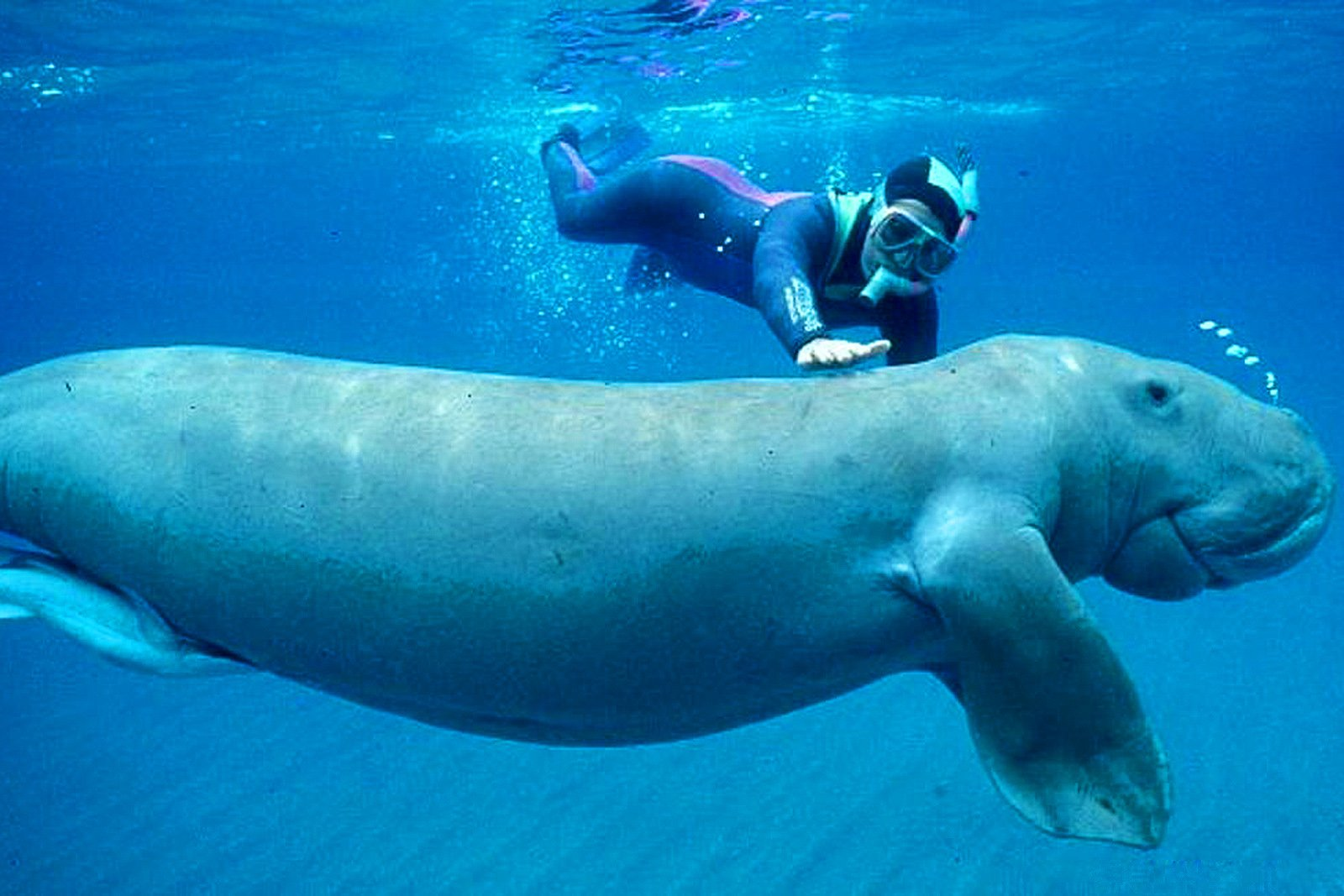 How to dive with dugongs in Abu Dhabi