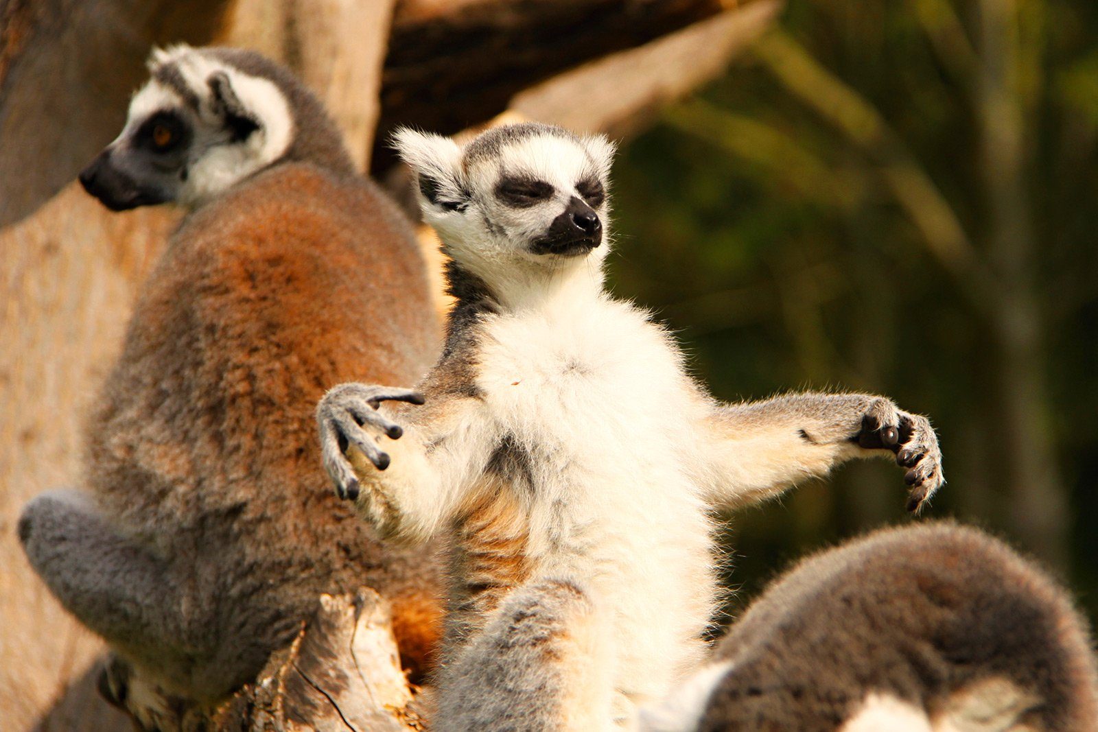 How to see a lemur in Antananarivo