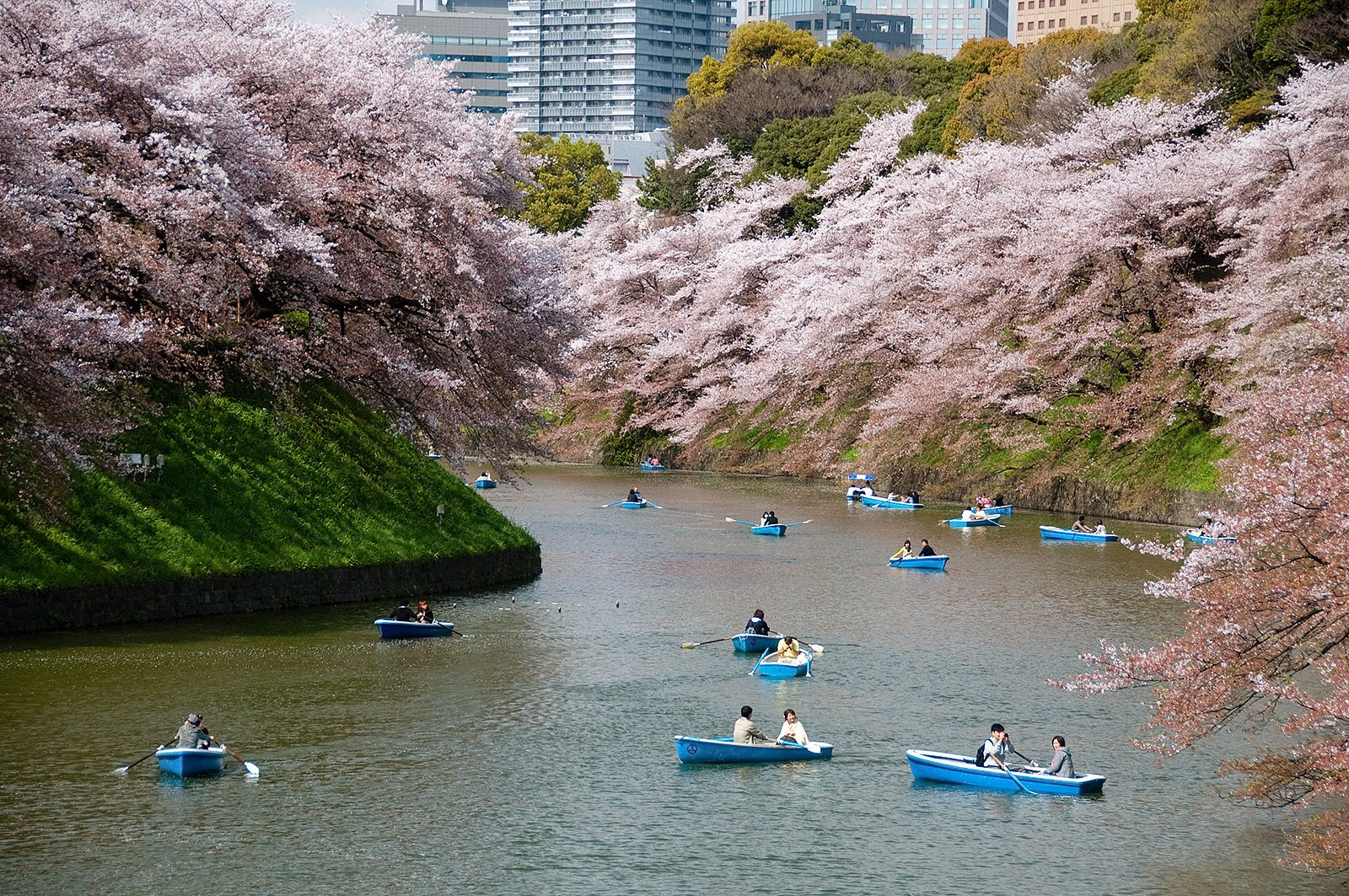 How to take a boat ride among the sakura cherry blossom in Tokyo