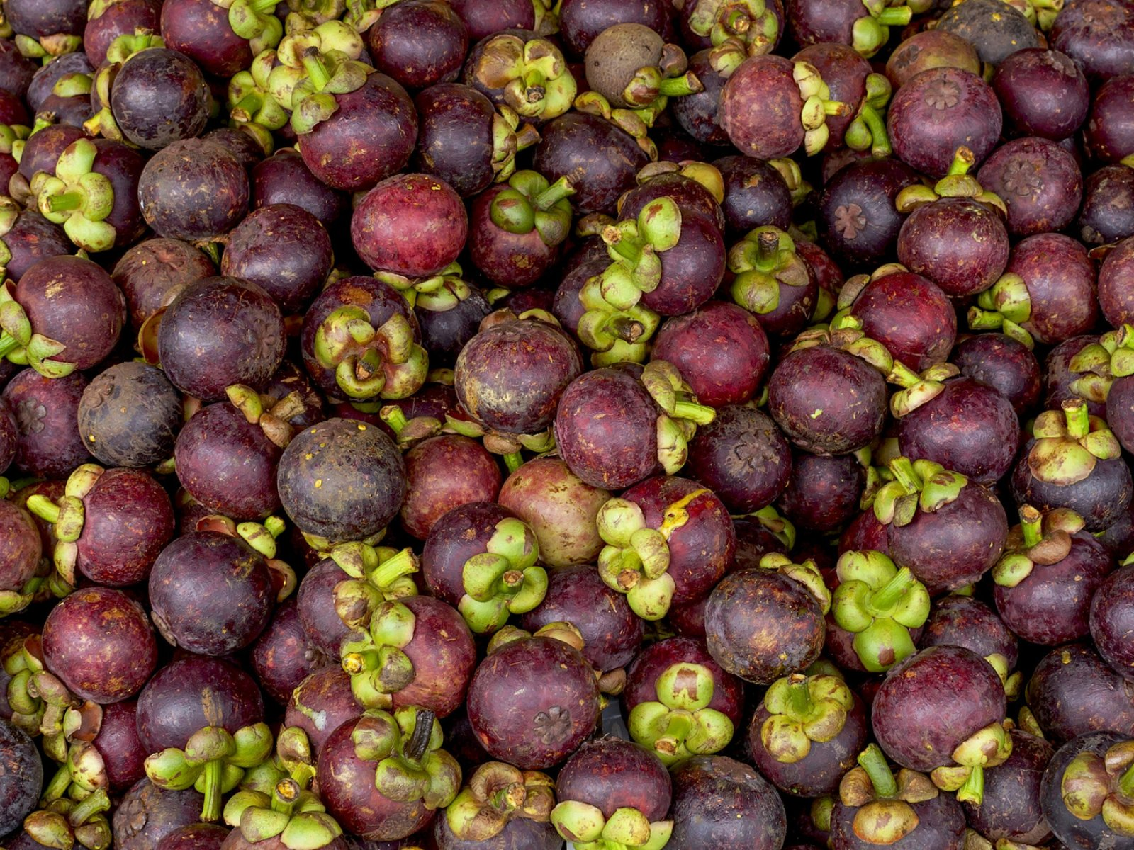 How to try mangosteen in Phuket