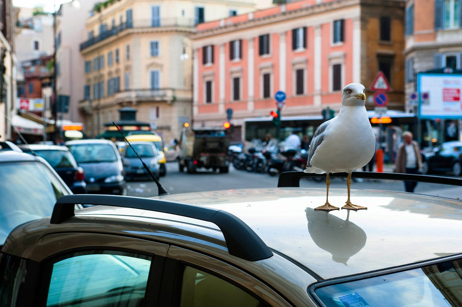 How to feed the seagulls near the Tiber in Rome