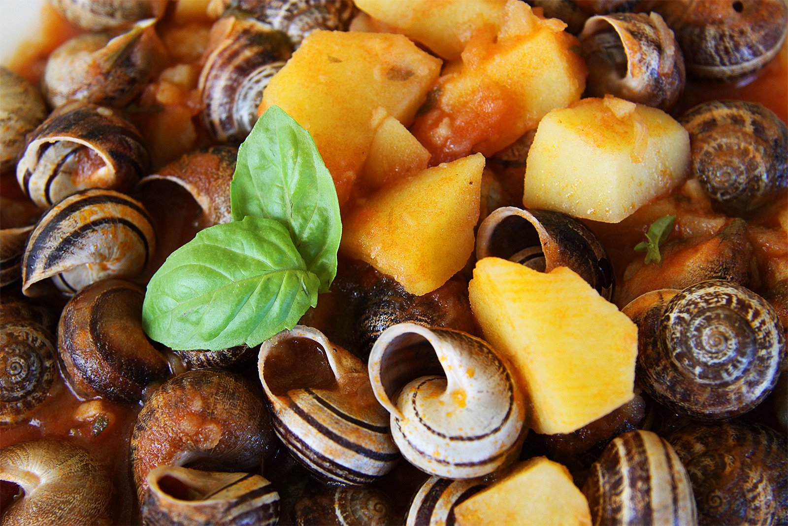 How to try snails on Sardinia