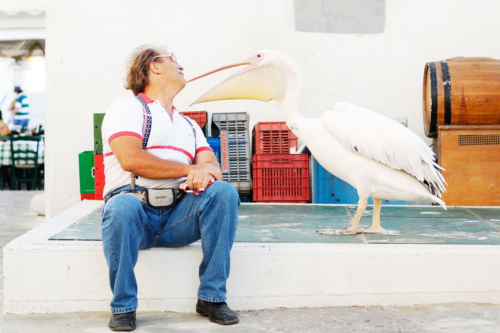 How to feed pink pelicans on Mykonos