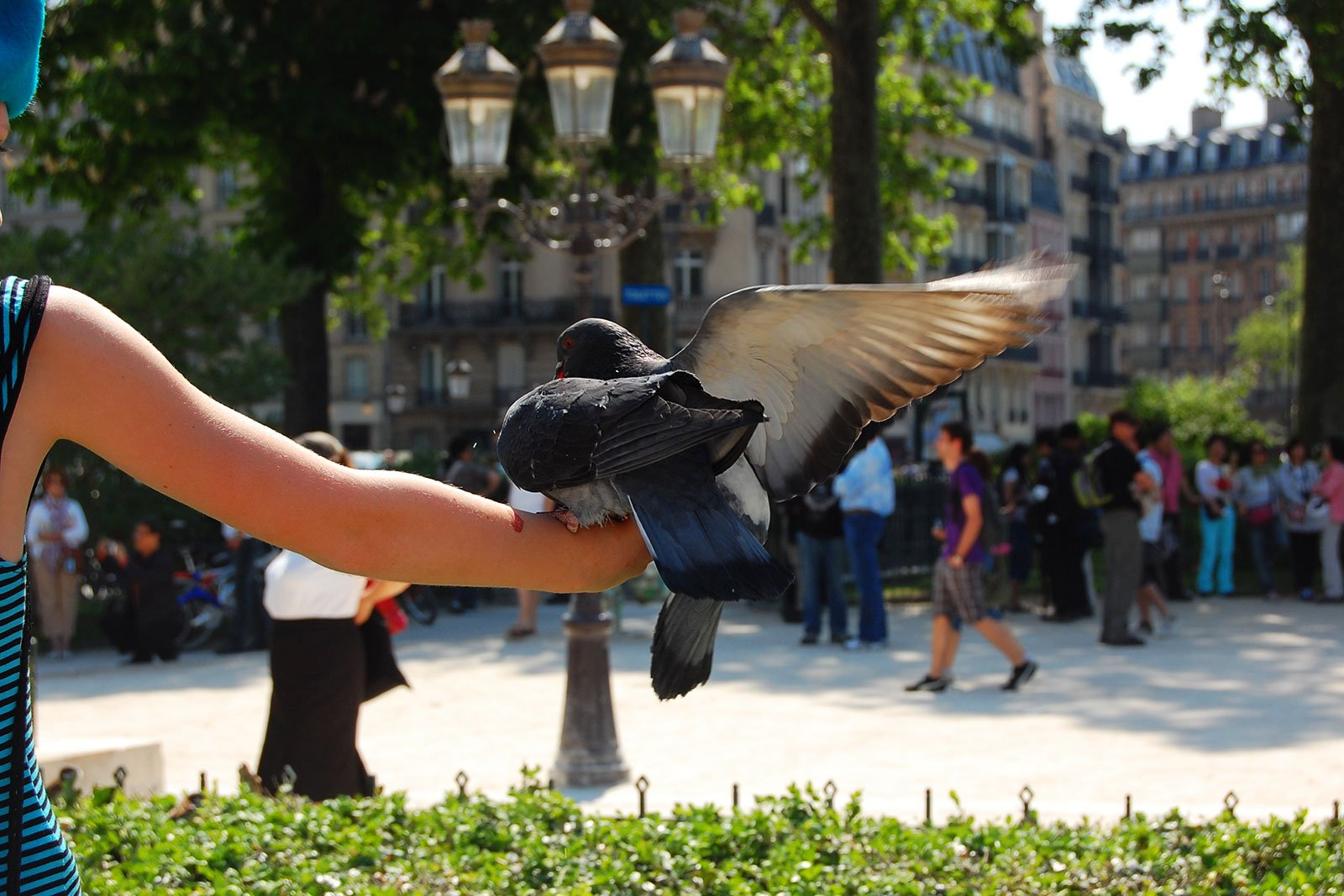 How to feed the pigeons in Paris