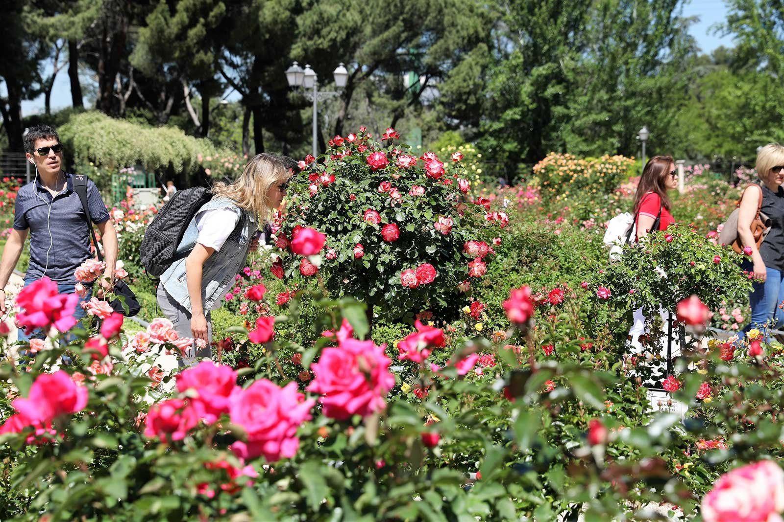 How to walk through the rose garden in the city park in Madrid