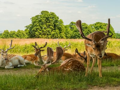 Feed a fawn in Richmond Park in London