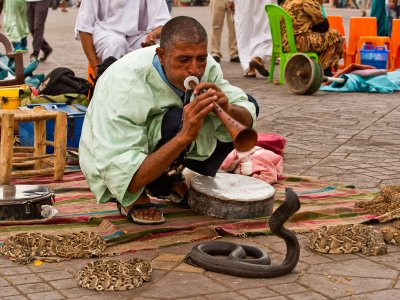 See snake charmers in Marrakesh