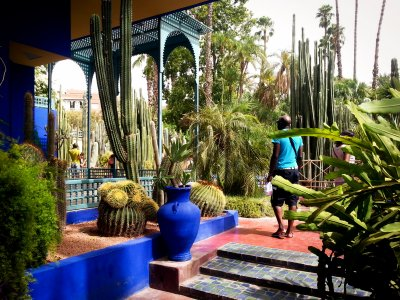 Visit magnificent Majorelle botanic garden in Marrakesh
