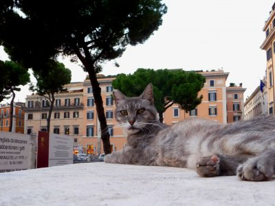 Become a cat caregiver in Rome