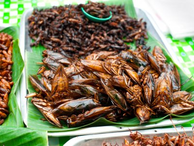 Try the roasted crickets in Phuket