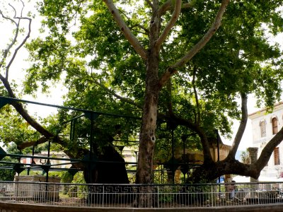 Seat ander the legendary Tree of Hippocrates on Kos