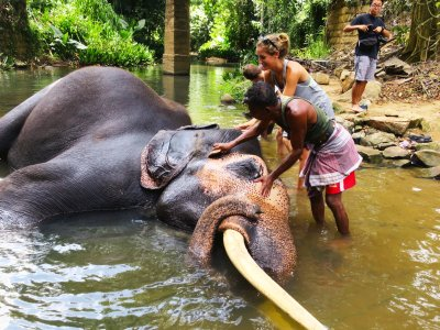 Give a wash to an elephant in Kandy