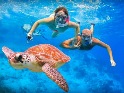 Swim with turtles in Galle