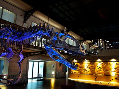 See the biggest in Europe dinosaur skeletons collection in Brussels
