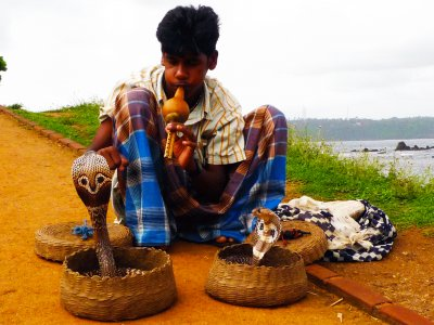 See snake charmer in Galle