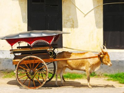Take an ox cart ride in Galle