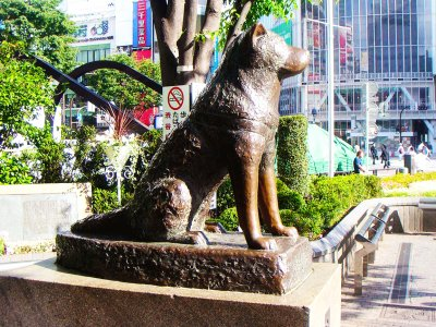 See the monument to the most faithful dog Hachiko in Tokyo