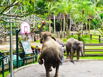 Play basketball with elephants in Bali