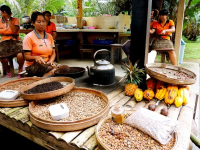 Try the most expensive coffee in the world in Bali